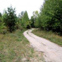Дорога в лесу :: Александр Скамо