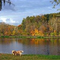 Осенний пёс :: ВАЛЕРИЙ