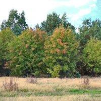 Осенние листья... :: Олег Попков