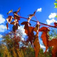 Осень !!! :: Татьяна Тумина
