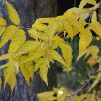 осенние листья1 :: Елена ***