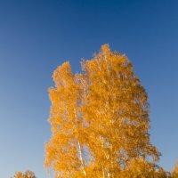 Осень золотится :: Татьяна Степанова
