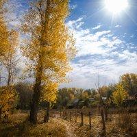 Осень под Оренбургом :: Андрей Липов