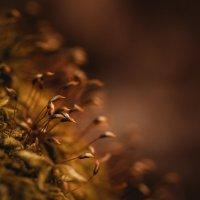 В лесной тени :: Олег Кашаев