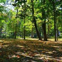 Осень в городском саду :: Милешкин Владимир Алексеевич