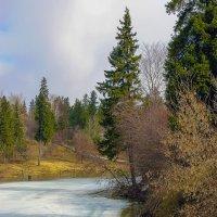 Что-то стало грустно, вспомнилась весна! :: Владимир Максимов