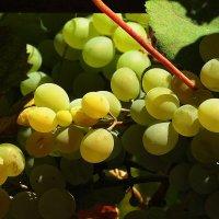 Осенние плоды :: Natali