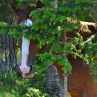 Horse in camouflage. :: Николай Воробьёв