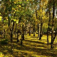 Осень пришла :: юрий Амосов