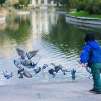 бууу...летите голуби :: Николай Леммер
