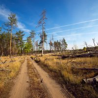 прогулки по лесу :: Василий Алехин