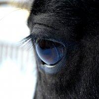 Взгляд лошади :: Ксения Валерьевна