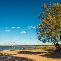 На заливе солнечный день :: Виталий