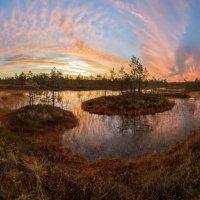 Волшебство северных болот. :: Фёдор. Лашков