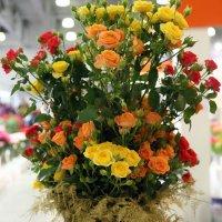буйство цветочное :: Олег Лукьянов