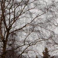 зима :: Рома Григорьев