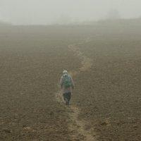 Тропка полевая :: Валерий Талашов