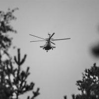Пролетая над лесом :: Михаил Вандич