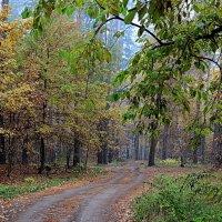 Задержался на ветвях сентябрь... :: Лесо-Вед (Баранов)
