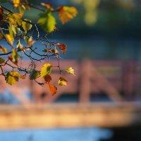 Что такое осень....)) :: Maks :))