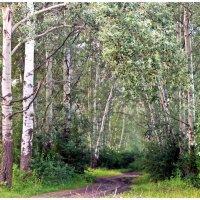 В лесу . :: Валентина ツ ღ✿ღ