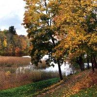 Золотая осень в Ораниенбауме :: Ирина Румянцева