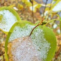 Первый снег :: Лидия (naum.lidiya)