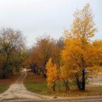 Прогулка с осенью. :: Чария Зоя