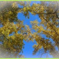 Желтоглазая осень :: юрий Амосов