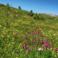 Альпийские луга. :: Геннадий Оробей