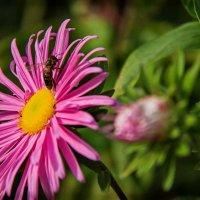 цветок и оса :: Наталья Краснюк