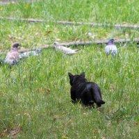 Кошка охотится на голубей :: Юлия Строчилина