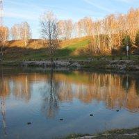На берегу осеннего пруда :: Наталья Золотых-Сибирская