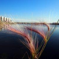 Остался от лета пучочек травы,но я буду помнить его до весны... :: Александр Попов