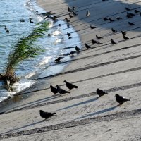 Птицы в городе... :: Тамара (st.tamara)