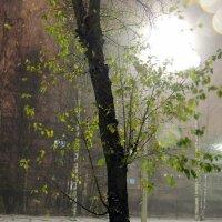 Первый крупный снегопад :: Майкл
