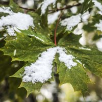 и выпал снег.... :: Лариса Батурова