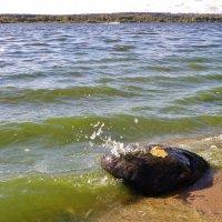 Шумит река Волга..... :: Святец Вячеслав