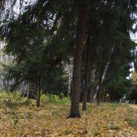 Осень :: Артем Лузин