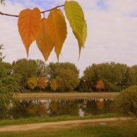 Осенние листья! :: Ирина Олехнович