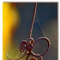 Виноградный вензель :: Nina Streapan