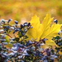 Осень :: nakip1