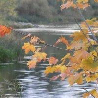 Осенние листья... :: Владимир Павлов