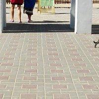 Кошки в Анапе тоже гуляют сами по себе :: Владимир Ростовский