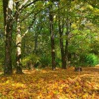 Осенний листопад :: Милешкин Владимир Алексеевич