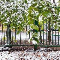 Первый снег . . . :: Константин Фролов