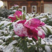 Первый снежок. :: Михаил Попов