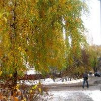 Еще деревья в своей красе, а снег уже выпал :: Елена Семигина