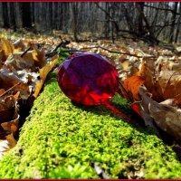 Осень драгоценная :: Андрей Заломленков