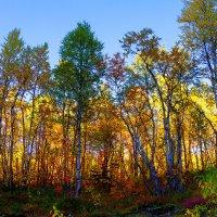 Осенний лес :: Александр Неустроев